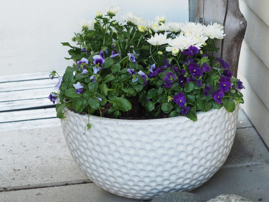 Puutarhan+kukkaset ruukussa